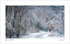 Winter (tobchasinglight) Tags: beechtrees buckinghamshire burnhambeeches chilterns cityoflondon corporationoflondon englishwoodland farnhamcommon frost landscape oaktrees snow stokepoges uk winter2017 â©paulmitchell