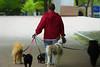 Dog Walker (Brian 104) Tags: dogs dogwalker summer digitalart ottawa
