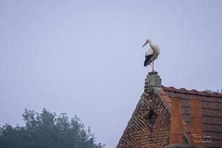 Le promontoire de la cigogne
