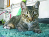 Tí (Janos Graber) Tags: gata animal felino tí lorena lorenasp
