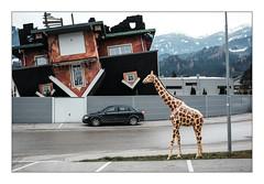 Everything as usual (Francesco Giusto) Tags: austria europe courtward giraffe landscape normal street uncommonplaces upsidedown urban