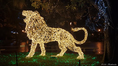 Lo Zoo che Vorrei (The Zoo I'd Want) (Mr. Bamboocha) Tags: 2017 italia italy leone lion lozoochevorrei lucidartista lucidartista2017 salerno thezooidwant villacomunale it