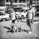 Walking the Dog thumbnail