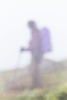 Hiker on Trail to Mount Townsend in Olympic National Forest (Lee Rentz) Tags: buckhornwilderness hoodcanal hoodcanalrangerdistrict july mounttownsend mttownsend olympicmountains olympicpeninsula olympics pacificnorthwest usforestservice washington washingtonstate alpine america backpack climate clouds cloudy fog foggy goretex green hike hikers hiking impressionism impressionistic lush meadow mist misty moist mountainous mountains nature northamerica northwest olympicnationalforest outdoor outdoors overcast rain rainy recreation summer terrain theolympics trail usa walking weather wet wild