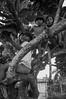 (Mateus.cb) Tags: brazil indigenous permaculture travel children nature joy kids tribe