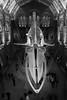 Like A Monster (sdupimages) Tags: light noirblanc blackwhite whale baleine museum musée bones skeleton squelette os bw nb london londres street rue architecture