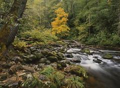 Harbinger of fall (baro-nite) Tags: cullasajariver nantahalanationalforest westernnorthcarolina fallcolor mediumformat film fujifilm velvia rvp50 e6 pentax 645n smcpentaxfa64513535mm epsonv700 affinityphoto