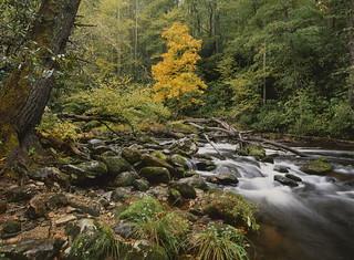 Harbinger of fall