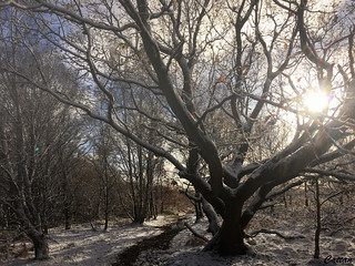Lighten up woodland - Gentleshaw