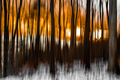 A Winter's Sunset (tonyajbender) Tags: nature abstract woods trees slow shutter drag orange sunset winter forest blur photochallenge2017 photochallengorg