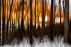 A Winter's Sunset (tonyajbender) Tags: nature abstract woods trees slow shutter drag orange sunset winter forest blur photochallenge2017 photochallengorg