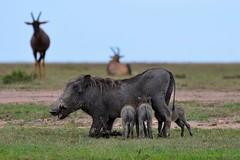 DDR_4095 (Santiago Sanz Romero) Tags: kenya wildlife animales ngc