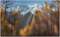 Trees are a poem the earth writes across the sky (PhotoArt Images) Tags: canada jasper autumn fall mountains snowcappedmountains sunrise sunshine sunbeams luminar trial
