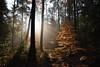 Le soleil était présent et la forêt avait encore des couleurs d'automne (Excalibur67) Tags: nikon d750 sigma globalvision 24105f4dgoshsma paysage landscape forest foréts arbres trees lumière automne autumn vosgesdunord