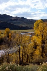 Autumn Yampa River (The Good Brat) Tags: colorado us landscape vertical trees autumn moffatt moffattcounty river yampa sky blue clouds curve curvy winding