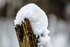 Schneehaube (J.Weyerhäuser) Tags: felder schnee hechtsheim landschaft pfahl