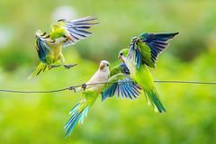 I arrived on time (Valter Patrial) Tags: matogrossodosul brasil br workshop birdwatching birds bird pantanal