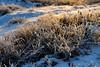 Frozen nature (STE) Tags: gelo frost frosty inverno winter freddo cold ghiaccio ice fuji fujifilm xt20 frozen erba grass