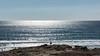 Horizons lointains... (De l'autre côté du mirOir...) Tags: presquîledequiberon ciel mer océan plage eau oiseau vague horizons bateau bretagne breizh brittany bzh fr france french nikon nikkor d810 nikond810 morbihan 56 bleu
