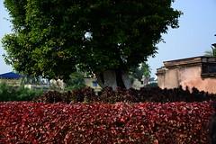 Bed of Colors (চিত্ত যেথা ভয় শূন্) Tags: ambika kalna