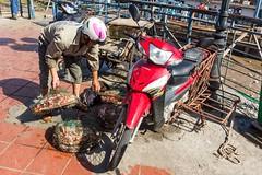 Zásilka krabů je na cestě (zcesty) Tags: zvířata vietnam18 motorka krab domorodci vietnam haiphong dosvěta hảiphòng vn