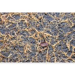 Abstract (horstmall) Tags: asphalt strase road route nass wet humide forest forêr wald lärchen larix pinaceae larixdecidua larch mélèze schwäbischealb jurasouabe suabe swabianalps donnstetten heuberg horstmall