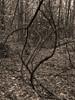 Vercors, 2017 (Olivier BERTRAND) Tags: olympusem5markii olivierbertrand arbre blackandwhite blackandwhitephotography digitalphotography forest forêt hybridcamera isère landscape lumix25mm monochrome micro43 noiretblanc nature naturallight 25mm panasoniclumix25mm paysage photography