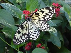 Horniman Museum (gwallter) Tags: horniman museum butterfly house