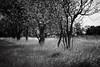 (Walter Daniel Fuhrmann) Tags: rural campo landscape dark bw blancoynegro bn blackandwhite viento wind