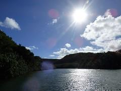 Wailua River State Park - Fern Grotto (88) (pensivelaw1) Tags: hawaii kauai wailuariverstatepark ferngrotto