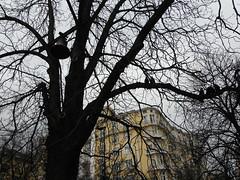 Sofija 089 [Explored 04.01.2018.] (jecadim) Tags: sofija church bell birds