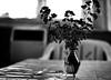 - winter bouquet - (-wendenlook-) Tags: sw bw stillleben stilllife monochrome bokeh straus bouquet vase minimal minimalistisch minimalistic sony a7ii 5518 55mm 180 f25 iso400