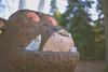 Bedgebury Pinetum (Dan Chippendale) Tags: bedgeburypinetum bedgebury pinetum leica m10 leicam10 leicadigital rangefinder rangefinderphotography digitalrangefinder leicasummilux35mmasphfle 35mm asph lux