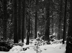 forest memories (raznicu2010) Tags: landscape winter bw horse drawn sled