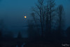 Blue Hour (SonjaPetersonPh♡tography) Tags: fog mapleridge mapleridgedykes bluehour sky trees silhouettes nikon nikond5300 bluesky lowcloud horizon landscape nightphotography nightscenes nightsky moon supermoon