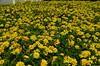 CNX_LannaFolklifeMuseum_04 (chiang_benjamin) Tags: chiangmai thailand lannafolklifemuseum exhibit flowers graden