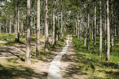 PSY05041 (Psychedelico91) Tags: travel trip da lat mood nature beautiful vietnam