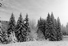 Plein de sapins (ZUHMHA) Tags: bulgarie bulgaria winter hiver pamporovo tree forest snow sky wood landscape horizon monochrome totalphoto inspired by love inspiredbylove