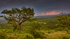 Landscape in the light of a thunderstorm (flowerikka) Tags: africa atmosphere clouds evening flora grass hills hluhluweimfolozipark landscape kwazulunatales light meadow mountain plants rain sky southafrica storm summer thunderstorm trees view way