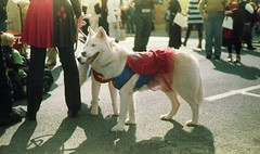 halloween in milford, 2015 (○ Hanna Lee ○) Tags: animals dog dogs petphotography pet pets petphotographer petphotographers artisticphotography artisticphotographer artisticphotographers artphotography artphotographer artphotographers photography photographer photographers film filmphotography 35mmphotography 35mm analogphotography filmphotographer filmphotographers ishootfilm tumblrphotographycommunity tumblrphotographercommunity photographersontumblr photographersoftumblr