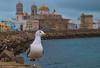 Cádiz. (jesusgag) Tags: paisajes gaviotas arquitectura