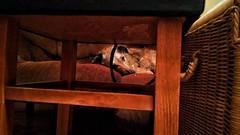 Sleepy Boy (morosus) Tags: morcsos kanapé couch sleepy álmos sleep budapestbudapest buda stoki rattan este figyel