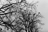 *** (s.luzin) Tags: bw film olympus35sp odintsovo birds tree