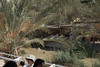 Taufstelle (vohiwa) Tags: israel palästina