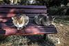 Where's your house (Melissa Maples) Tags: antalya turkey türkiye asia 土耳其 apple iphone iphone6 cameraphone winter bench park animals kitties cats
