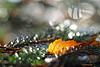 Hidden treasures (ej - light spectrum) Tags: bokeh olympus omd em5markii mzuiko makro macro forest wald winter nature natur december dezember 2017 light leaf schweiz switzerland autumn herbstfarben backlight blatt nadeln needles fir