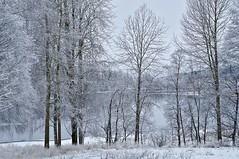 Winter (Stefano Rugolo) Tags: winter stefanorugolo pentax k5 pentaxk5 smcpentaxm50mmf17 ricohimaging frost snow tree branches christmas sweden hälsingland sverige landscape lake