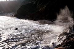 66 (outandaboutindevon) Tags: torquay devon coast path cliffs downs babbacomb ellacomb oddicomb cockington thatch palm tree sea shore thatchers rock beach
