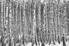 Photographed by Barabanov Alexey 2016 (valmar20051) Tags: липецкаяобласть липецк пейзаж россия фотография природа природароссии березы рыбак вода солнце река водоём снег первыйснег метель лодка рыбаки чернобелая мороз морозисолнце камыш