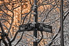 Wall St. and Broadway (ArmyJacket) Tags: wallsteet broadway nyc newyorkcity manhattan city street signs snow weather outdoors sunset urban trees